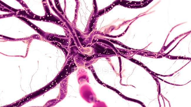 Abstract colored illustration of human nerve cell on light background. — Stock Photo