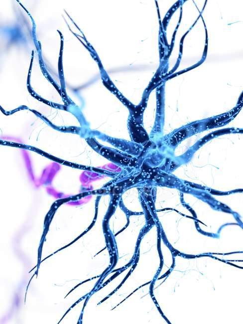 Illustration numérique de cellules nerveuses humaines avec dendrites . — Photo de stock