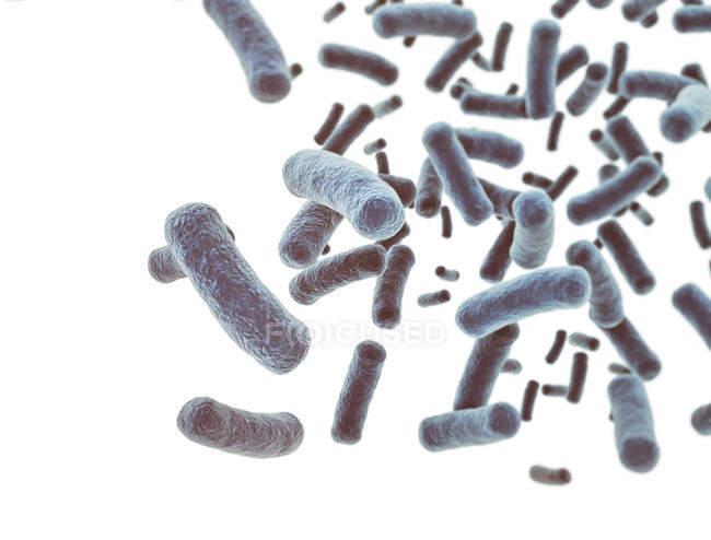 Клетки бактерий на белом фоне, цифровой иллюстрации. — стоковое фото
