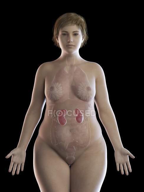 Ilustración de mujer con sobrepeso y riñones visibles sobre fondo negro . - foto de stock