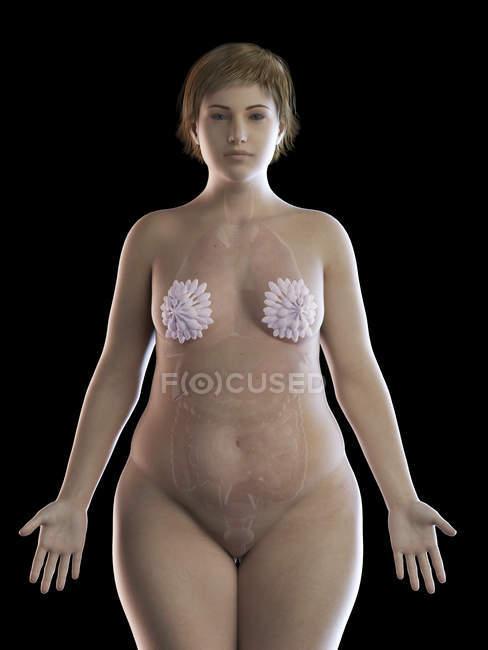 Ilustración de mujer con sobrepeso con glándulas mamarias visibles sobre fondo negro . - foto de stock