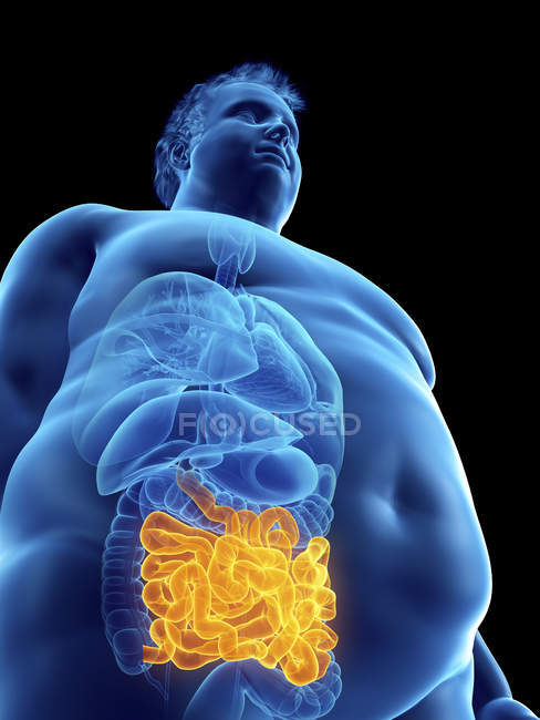 Illustration of silhouette of obese man with visible intestine. — Stock Photo