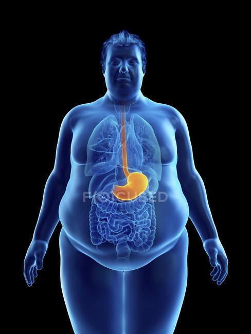 Illustrazione della silhouette dell'uomo obeso con stomaco visibile . — Foto stock