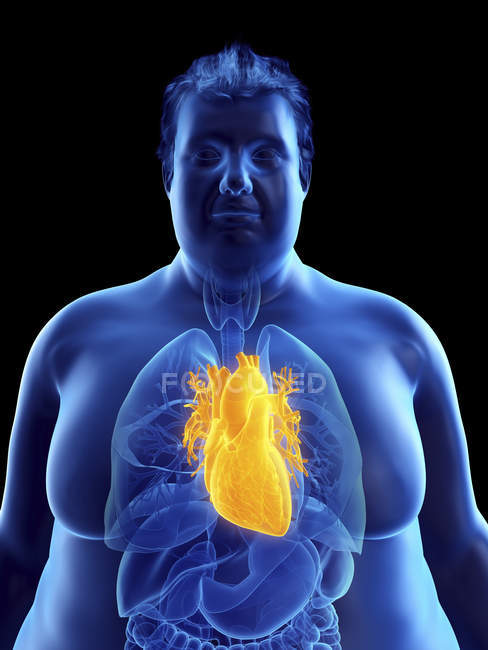 Illustration of silhouette of obese man with visible heart. — стоковое фото