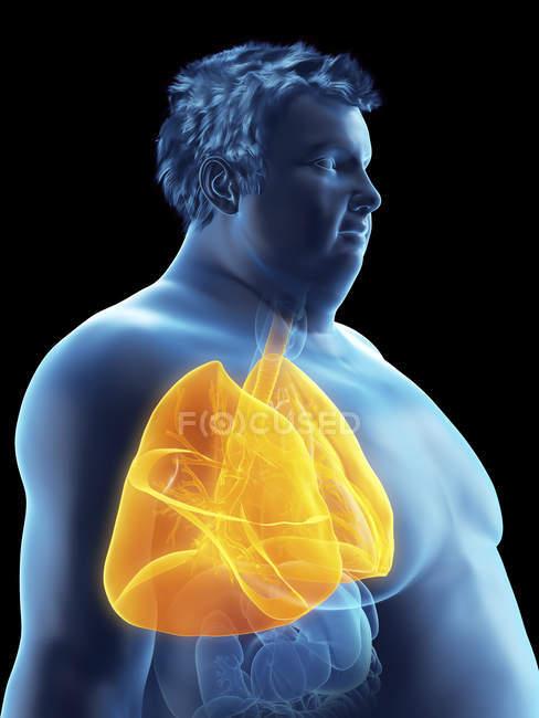 Illustrazione della silhouette dell'uomo obeso con polmoni visibili . — Foto stock