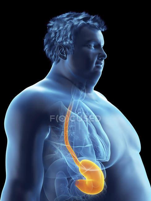 Ilustración de la silueta del hombre obeso con el estómago visible . - foto de stock