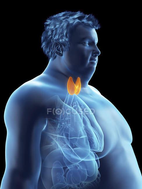 Ilustración de la silueta del hombre obeso con glándula tiroides visible . - foto de stock