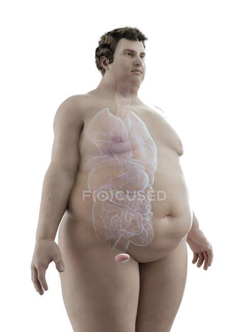 Ilustración de la figura del hombre obeso con vejiga visible . - foto de stock