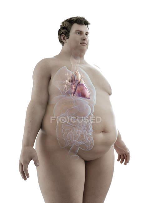 Ilustración de la figura del hombre obeso con el corazón visible . - foto de stock