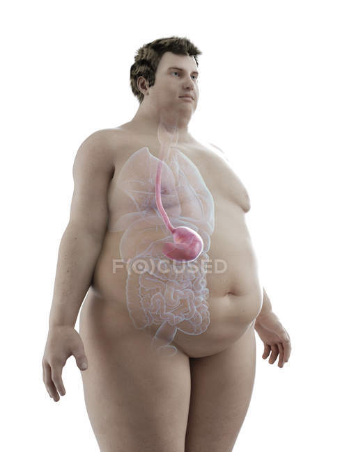 Illustration of figure of obese man with visible stomach. — Stock Photo