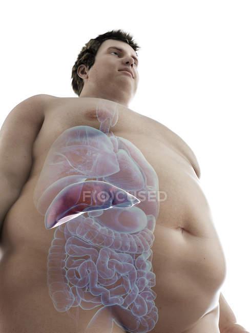 Ilustración de la figura del hombre obeso con hígado visible . - foto de stock