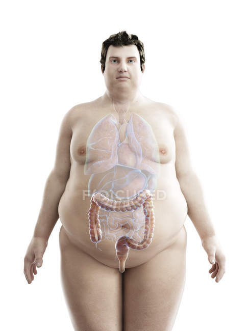 Ilustración de la figura del hombre obeso con colon visible . - foto de stock
