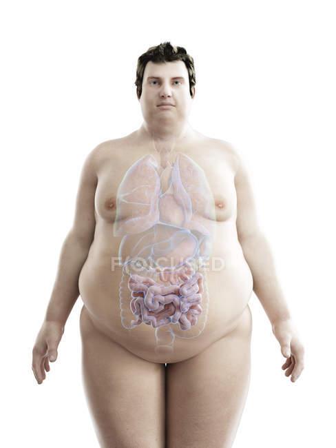 Ilustración de la figura del hombre obeso con intestino visible . - foto de stock