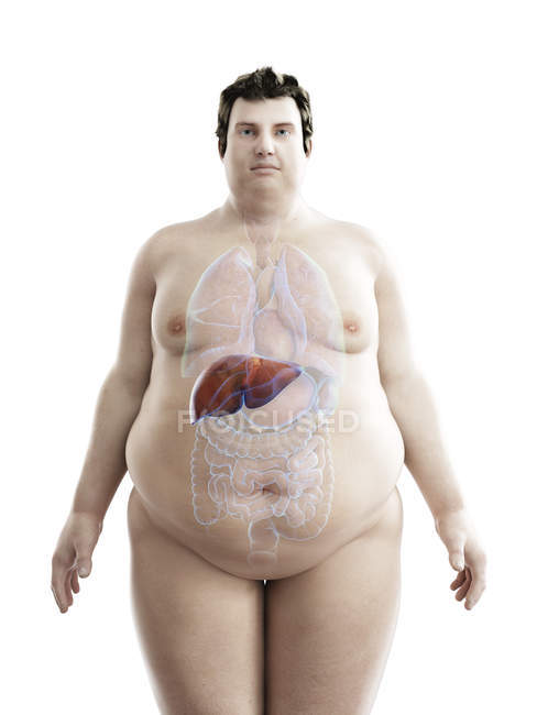 Illustration of figure of obese man with visible liver. — стоковое фото