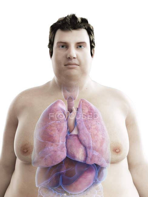 Ilustración de la figura del hombre obeso con órganos visibles . - foto de stock
