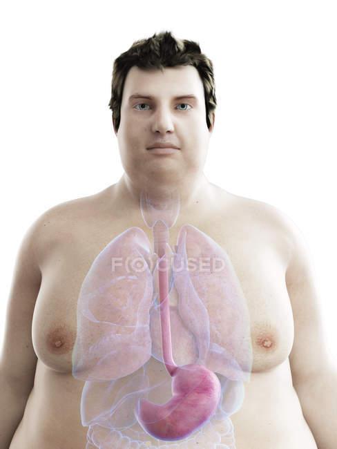 Ilustración de la figura del hombre obeso con el estómago visible . - foto de stock
