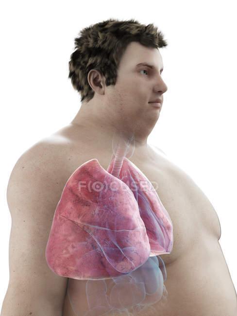 Ilustración de la figura del hombre obeso con pulmones visibles . - foto de stock