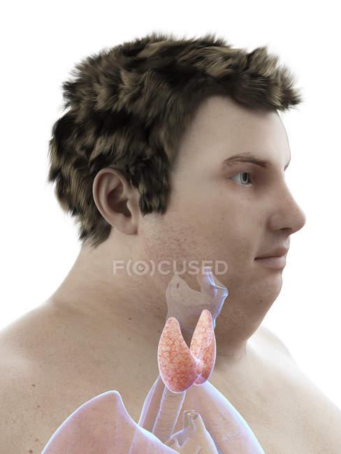 Иллюстрация фигуры толстяка с видимой щитовидной железой . — стоковое фото