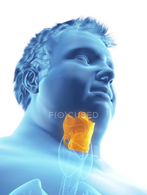 Ilustración de la figura del hombre obeso con laringe visible . - foto de stock