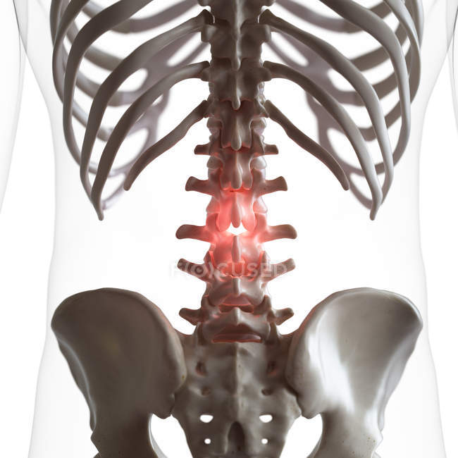 Digital illustration of pain in lower spine in human skeleton. — стоковое фото
