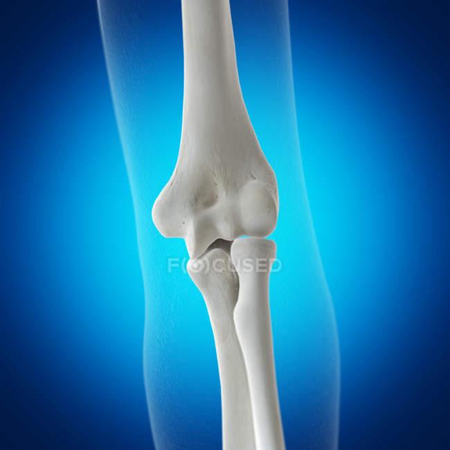 Ilustração dos ossos do cotovelo no esqueleto humano sobre fundo azul. — Fotografia de Stock