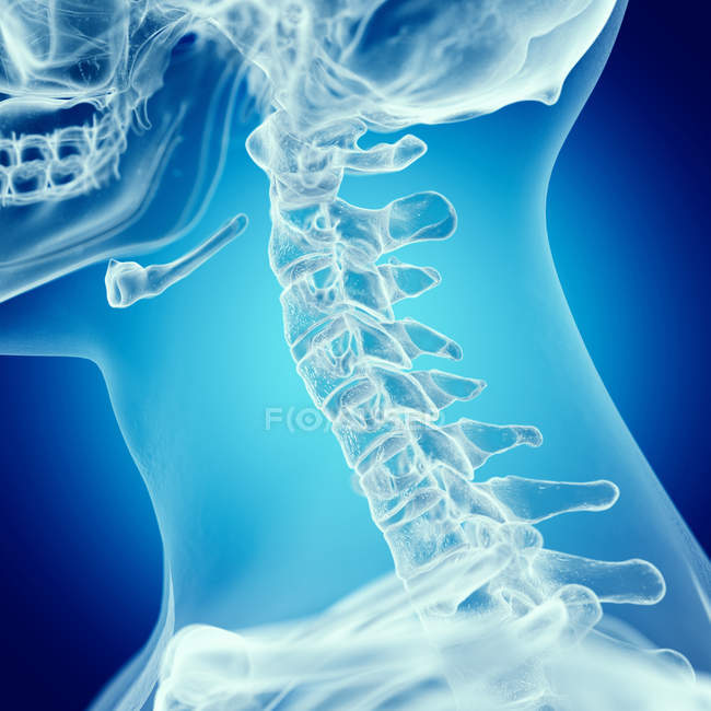 Illustration of upper spine in human skeleton on blue background. — Stock Photo