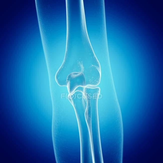 Ilustração da articulação do cotovelo no esqueleto humano sobre fundo azul. — Fotografia de Stock