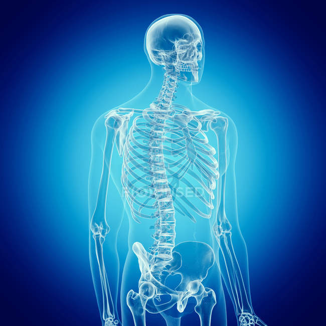 Illustration of human skeleton on blue background. — Stock Photo