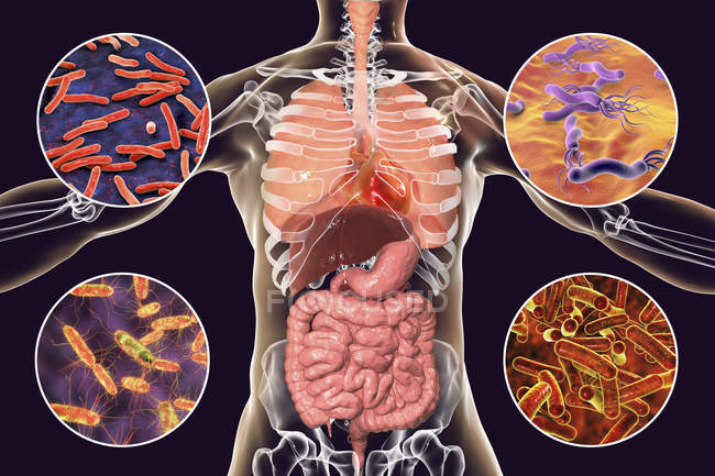 Digital illustration showing bacteria causing infections of respiratory and digestive system, Mycobacterium tuberculosis, Helicobacter pylori, Salmonella, Shigella. — Stock Photo