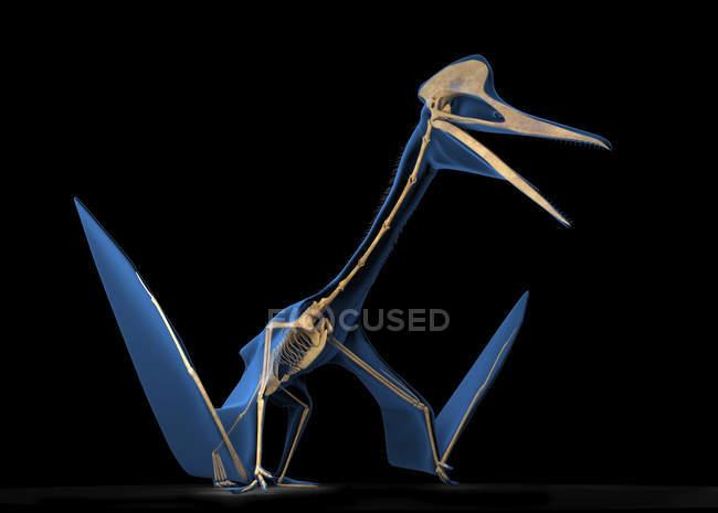 Quetzalcoatlus esqueleto sobre fondo negro, ilustración digital . - foto de stock