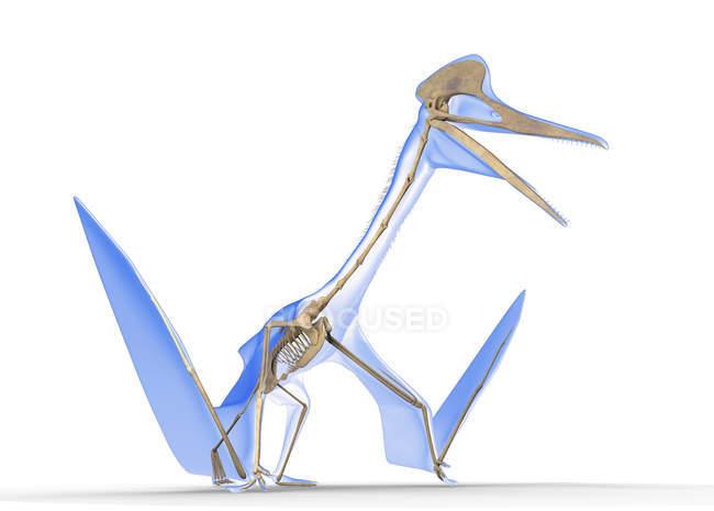 Quetzalcoatlus skeleton against white background, digital illustration. — Stock Photo