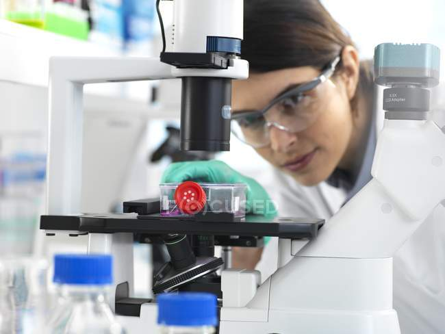 Female cell biologist placing flask containing stem cells cultivated in red growth medium under microscope. — Stock Photo