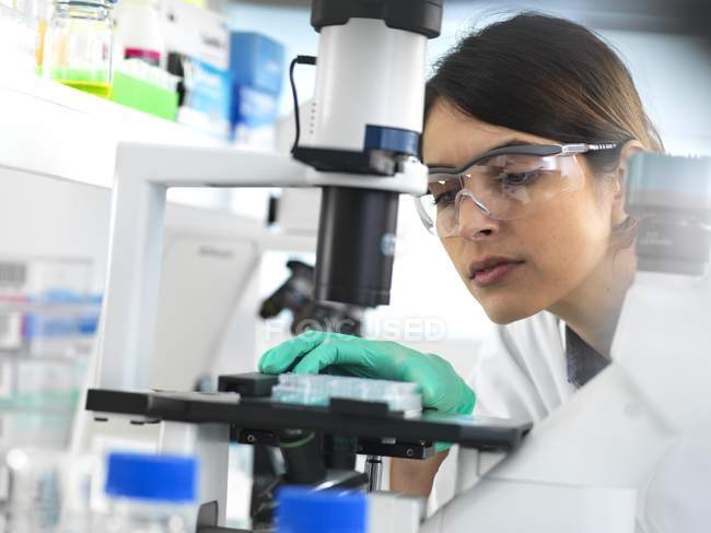 Scientist viewing multi well plate containing samples for testing in laboratory. — Stock Photo