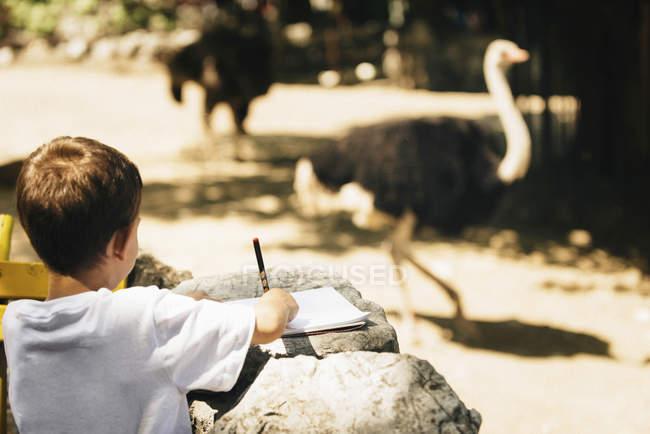 Rear view of little boy drawing ostrich in zoo park. — стоковое фото