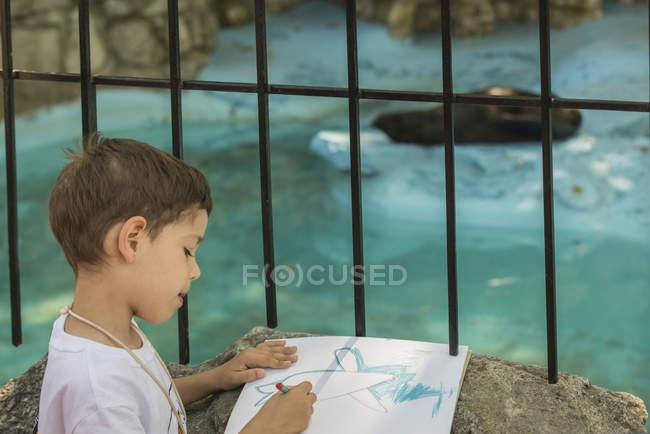 Rear view of little boy drawing captive seal in zoo. — стоковое фото