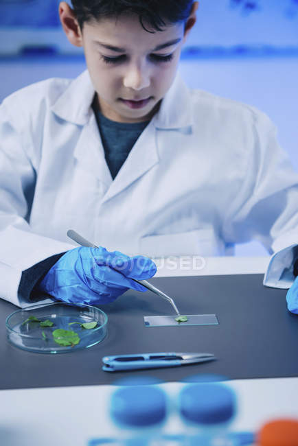 Schoolboy putting leaves on microscope slide in school laboratory. — Stock Photo