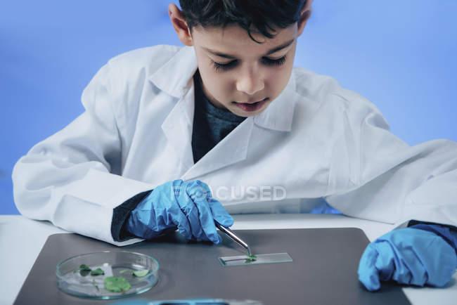 Écolier mettant des feuilles sur la glissière de microscope dans le laboratoire scolaire . — Photo de stock