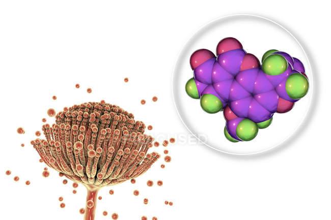 Молекулярная модель афлатоксина B2 микотоксина и крупный план гриба Aspergillus flavus. — стоковое фото