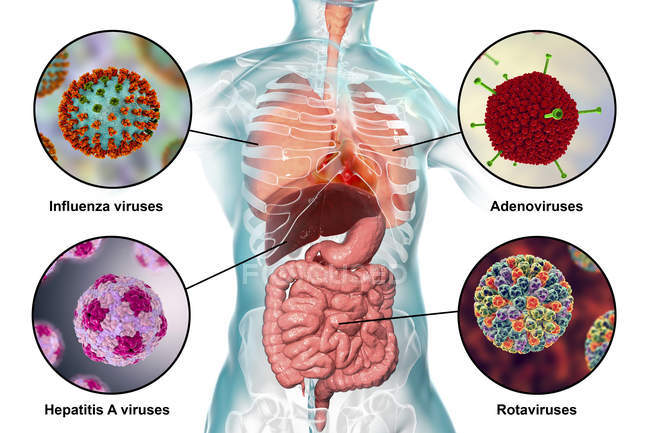 Virus patogeni umani che causano infezioni respiratorie ed enteriche, illustrazione digitale . — Foto stock