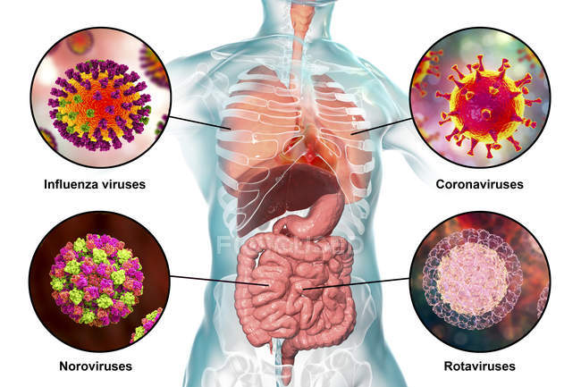 Human pathogenic viruses causing respiratory and enteric infections, digital illustration. — Stock Photo