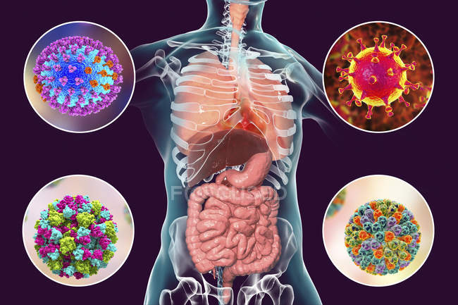 Human pathogenic viruses causing respiratory and enteric infections, digital illustration. — Stockfoto