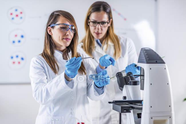 Estudiantes investigando muestra en laboratorio . - foto de stock