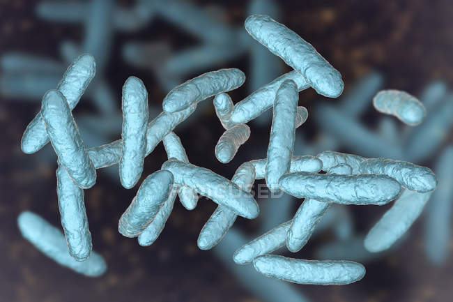 Probiotic bacteria in normal intestinal microbiota, digital illustration. — Stock Photo