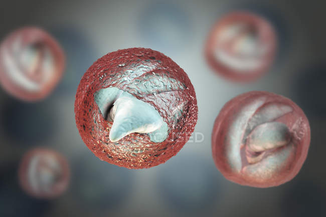 Cryptosporidium parvum parasite in oocyst form causing of cryptosporidiosis, digital illustration. — Stockfoto