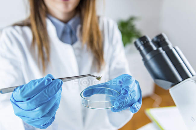 Scientific laboratory researcher making chemical experiment. — Stock Photo