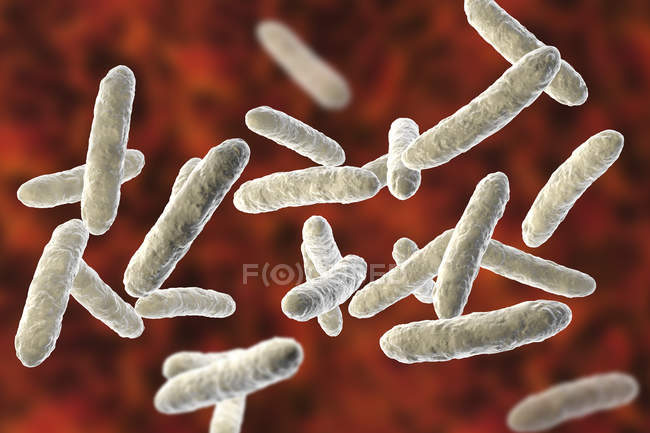 Batteri probiotici nel normale microbiota intestinale, illustrazione digitale . — Foto stock