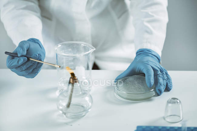 Midsection of female microbiologist sterilizing inoculation loop. - foto de stock