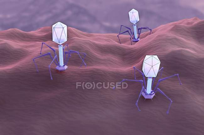 Digital illustration of multiple bacteriophages viruses infecting bacteria. — Stock Photo