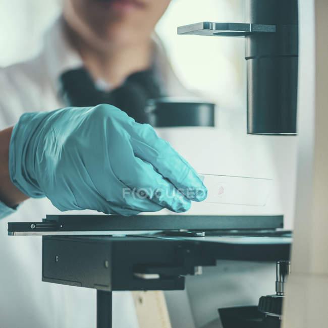 Scientifique travaillant en laboratoire et plaçant la lame de microscope sur scène . — Photo de stock