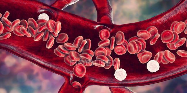 Glóbulos rojos y leucocitos en sección transversal de los vasos sanguíneos, ilustración digital. - foto de stock